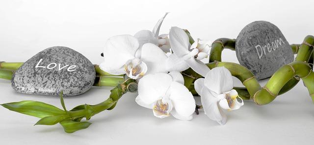 bambus, orchideje, kameny