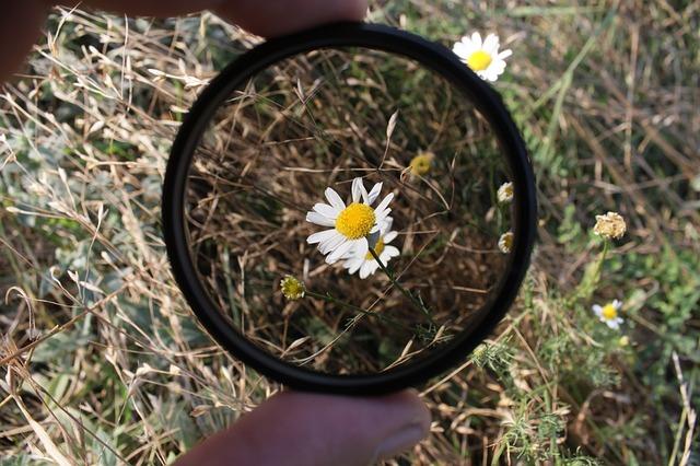 květinka pod sklíčkem