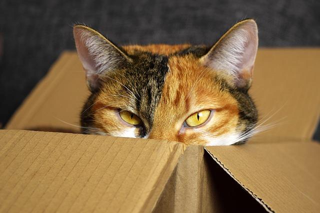 kočka v krabici.jpg