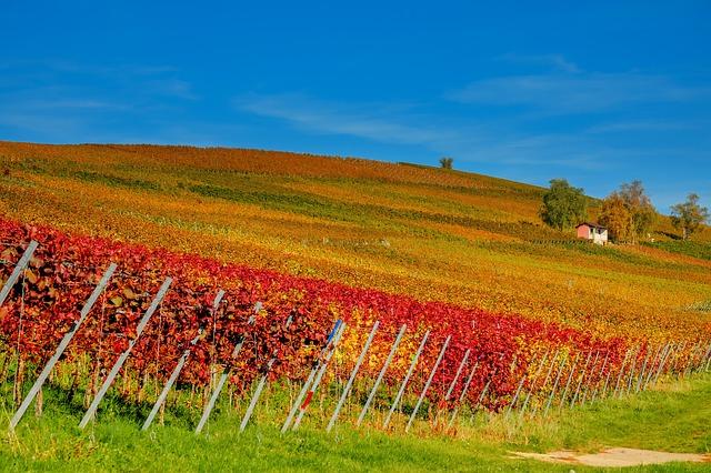 malebný pohled na vinohrad